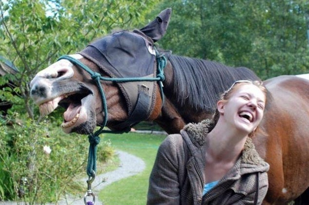 The 'This Is What You Look Like,' Horse Edition