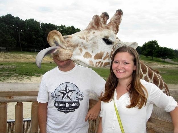 The Unexpected Giraffe