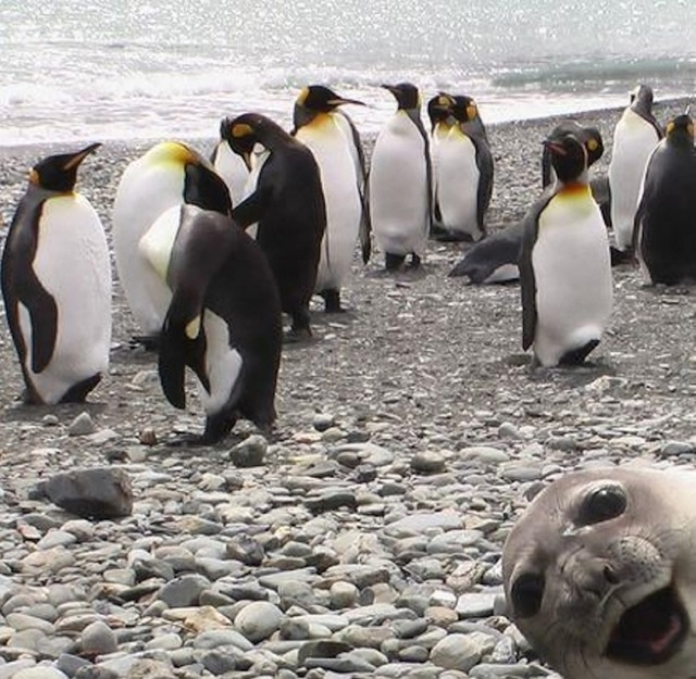 animal-photobombs-25