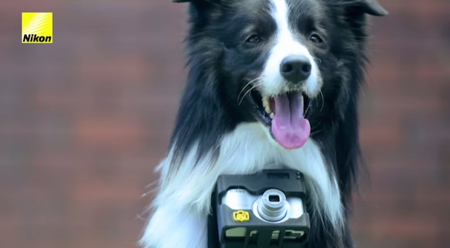 Grizzler Phodographer Dog Photographer 8