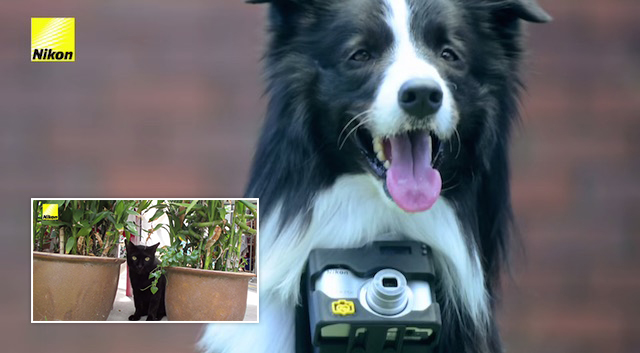 World's First 'phodographer' Dog Uses Heartrate Monitor to Take a Photo Whenever He Gets Excited 9
