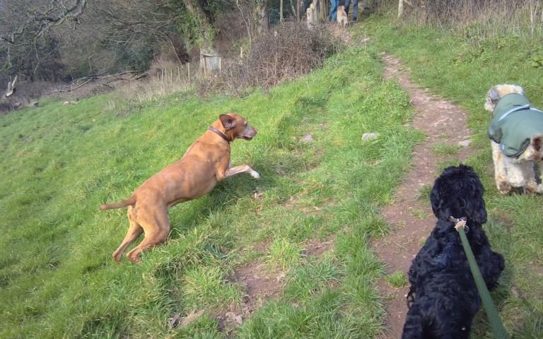 walking dogs explore